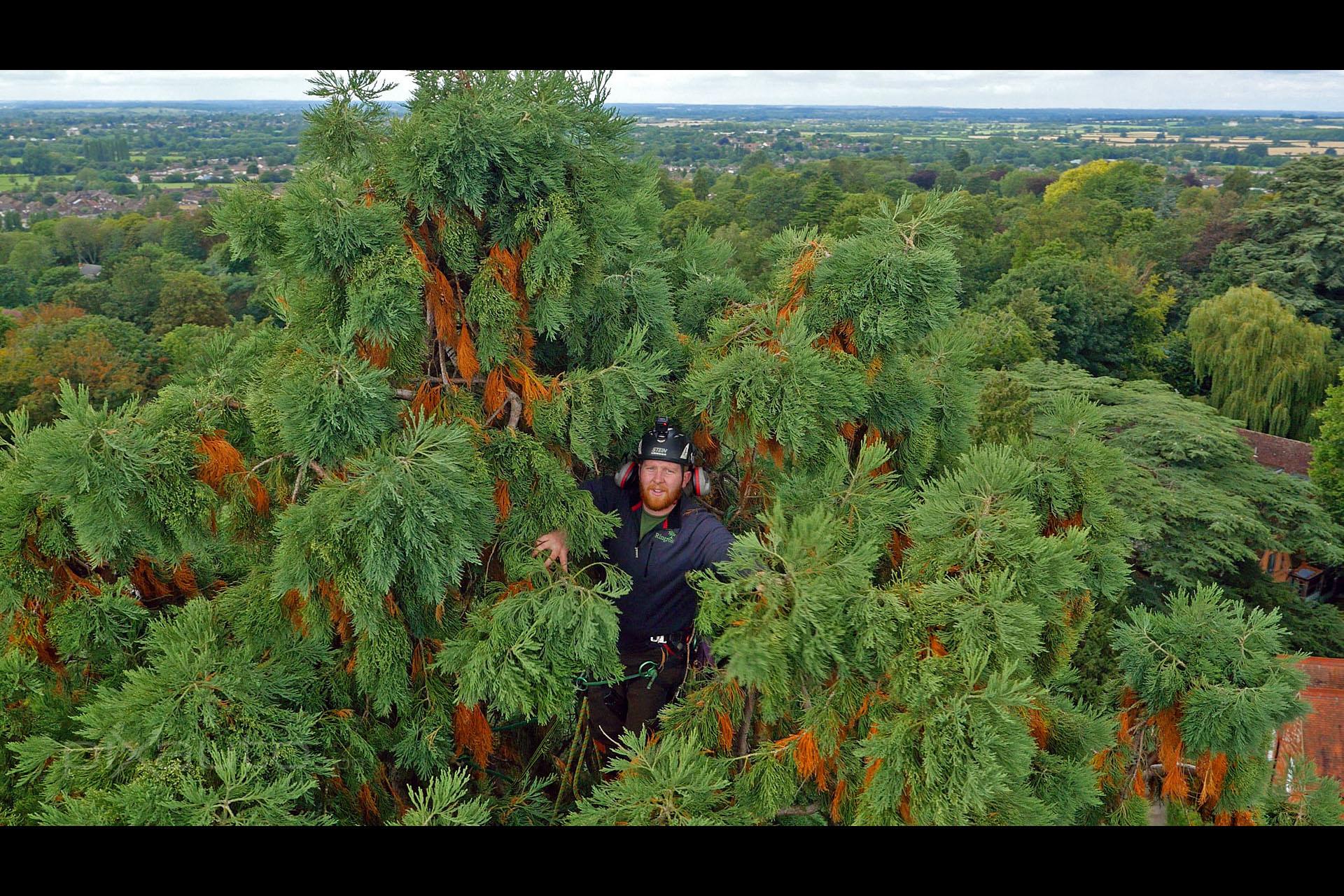 Ringrose Tree Surgeons aerial photo