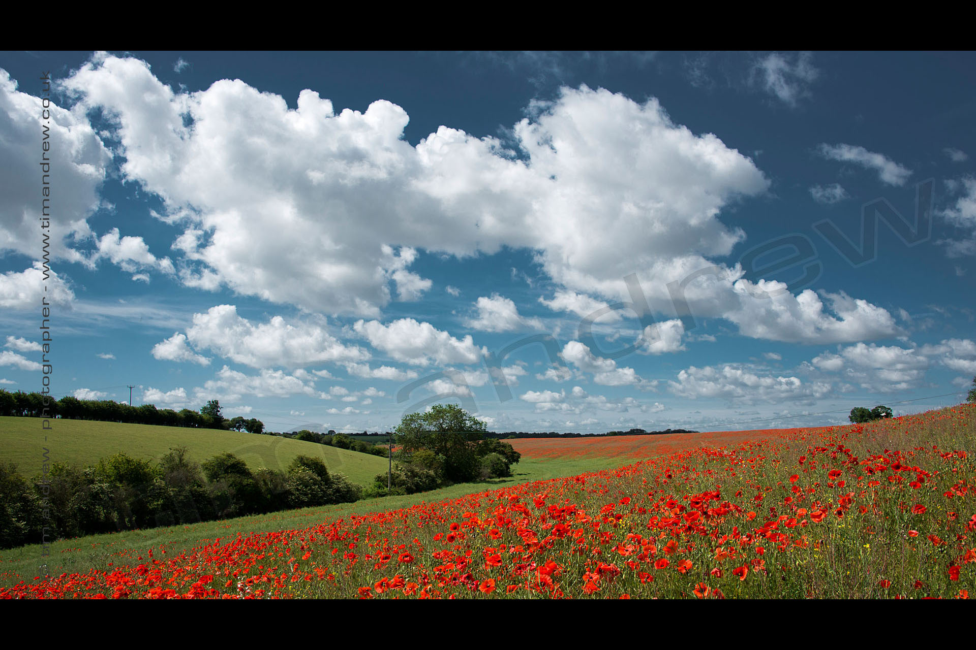 Cotswolds poppy field UK